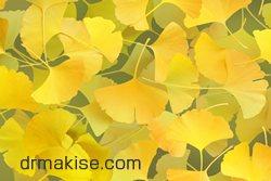 イチョウの葉エキス